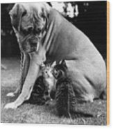 Boxer And Kittens Wood Print by Ray Moreton