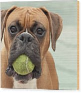 Boxer Dog Wood Print by Jody Trappe Photography