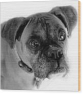 Boxer Dog Wood Print