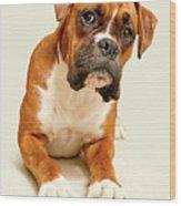 Boxer Dog On Ivory Backdrop Wood Print