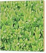 Boxwood Leaves Wood Print