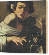Boy Bitten By A Lizard, 1596 To 97 Wood Print