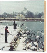 Boy Feeding Swans- Germany Wood Print