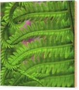 Bracken Fern Wood Print