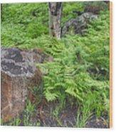 Bracken Fern Meadow Wood Print