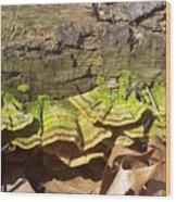Bracket Fungus Wood Print