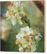 Bradford Pear 8932 Idp_2 Wood Print