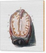 Brain, Anatomical Illustration, 1802 Wood Print