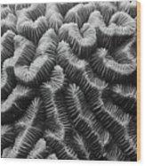 Brain Coral Details Wood Print