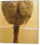 Brain Drain Wood Print