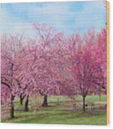 Branch Brook Cherry Blossoms Wood Print