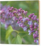 Branch Lilac Wood Print