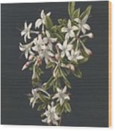 Branch Of A Flowering Azalea, M. De Gijselaar, 1831 Wood Print