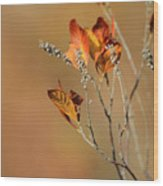 Branch Of Autumn Wood Print
