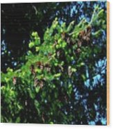 Branch Of Cones Wood Print