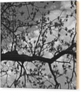 Branch Patterns Wood Print