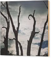 Branch Silouettes On Skeleton Beach Wood Print