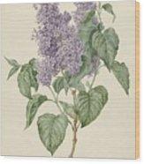 Branch With Purple Lilacs, Maria Geertruyd Barbiers-snabilie, 1786 - 1838 Wood Print