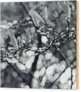 Branch With Seed Pods Wood Print