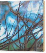 Branches 24 Wood Print