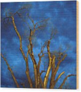 Branches Against Night Sky H Wood Print