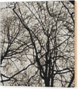 Branches Intertwined Wood Print