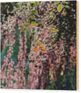 Branches Of A Tree With Colorful Leaves Shining In The Sunlight Wood Print