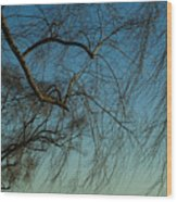 Branches Of A Weeping Willow Tree Wood Print