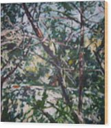 Branches Of Light Wood Print