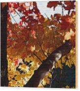 Branching Into Autumn Wood Print