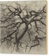 Branching Out In Autumn Antique Wood Print