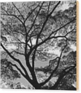 Branching Out In Bw Wood Print