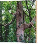 Branching Tree Wood Print