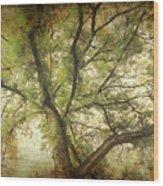 Branching Upward Wood Print
