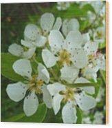 Brandy In Bud On The Pear Tree Wood Print