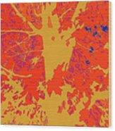 Brandywine  Maple Fall Colors 4 Wood Print