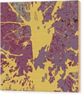 Brandywine  Maple Fall Colors 7 Wood Print