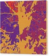 Brandywine  Maple Fall Colors 8 Wood Print