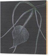 Brassalove Nordosa Orchid Wood Print