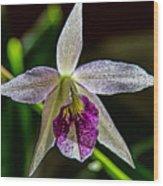 Brassocattleya Orchid Wood Print