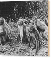 Brazil: Monkeys Wood Print