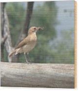 Brazilian Ovenbird Wood Print