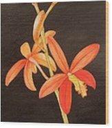 Brazilian Red Laelia-miniature Orchid Wood Print