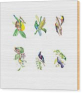 Brazilian Tropical Birds Wood Print