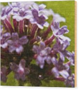 Brazillian Verbena Wood Print