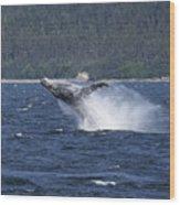 Breaching Whale. Wood Print