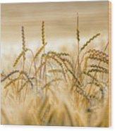 Bread Nr. 1 Wood Print