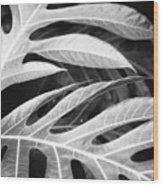 Breadfruit Tree Leaves Wood Print