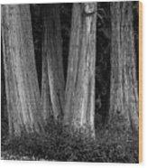 Breadth Of Trees Wood Print