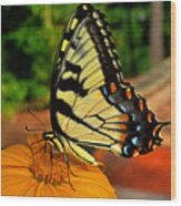 Breakfast At The Gardens - Swallowtail Butterfly 005 Wood Print